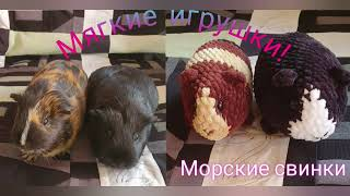 Морская свинка крючком. Видео мастер-класс, схема и описание по вязанию игрушки амигуруми